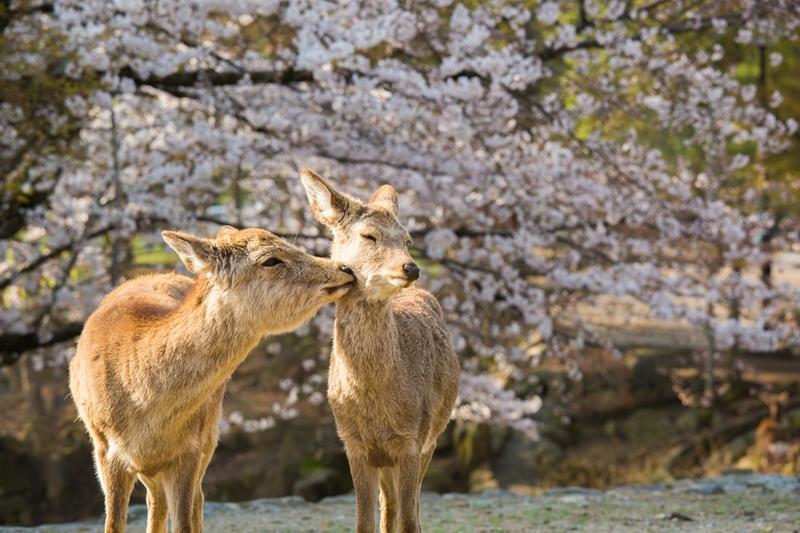 奈良鹿公園, 奈良