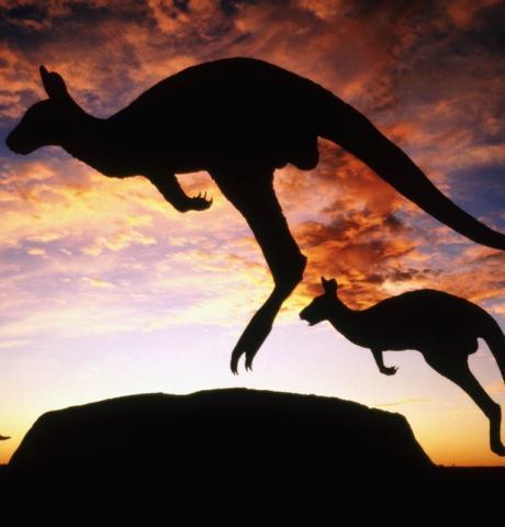 australia-kangaroo-twilight_1366x768
