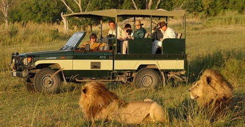 game-drive-lions