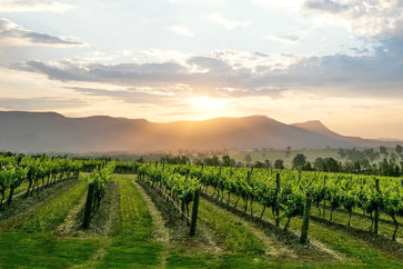 Hunter Valley 1 Day Tour