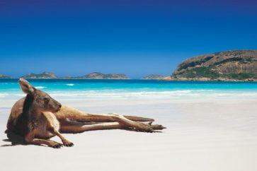 kangaroo-luckybay