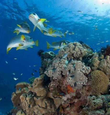 see-marine-life-like-never-befor-17301_1024x667