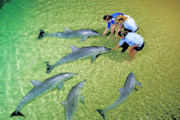 dolphin-feeding-9362-crop