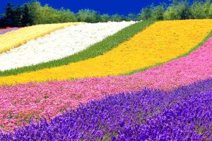 6 Day Beautiful Hokkaido Tour