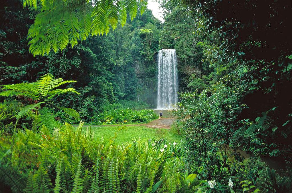 daintree-milla-milla-falls