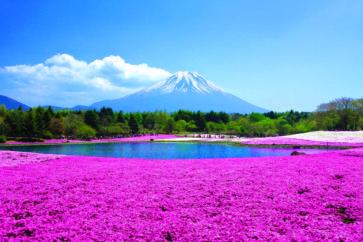 fuji-moss-pink