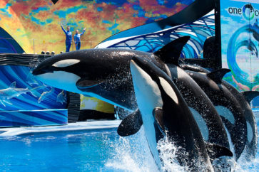 san-diego-seaworld-top