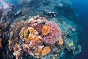 diving-on-the-great-barrier-reef-1
