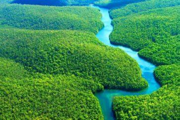 amazon-rain-forest